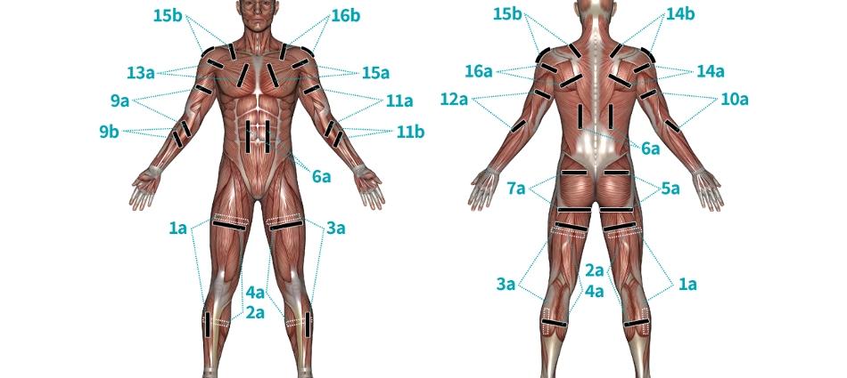 Vik16-musclefront2B